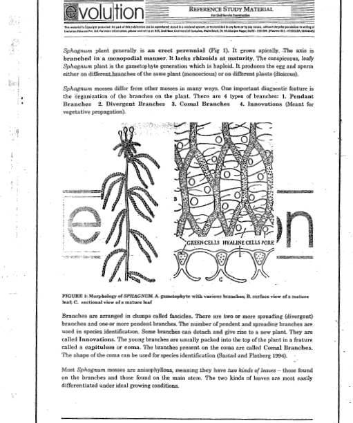 botany notes Botany books this section contains free e-books and guides on botany, some of the resources in this section can be viewed online and some of them can be downloaded plant botany an introduction to plant anatomy, morphology and physiology.